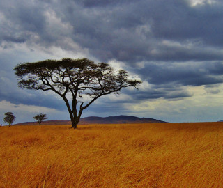 A Look At Tanzania, Africa